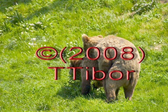 Bears*01*