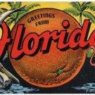 FLORIDA large letter linen postcard Kropp