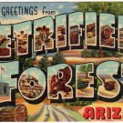 PETRIFIED FOREST, Arizona large letter linen postcard Teich