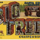 BIG TREES, California large letter linen postcard Teich