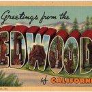 REDWOODS, California large letter linen postcard Teich