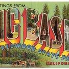 BIG BASIN REDWOOD STATE PARK, California large letter linen postcard Teich
