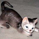 Playful Gray Cat