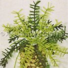 Potted Asparagus Fern Crewel Embroidery Kit