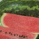 Cobb Gem Watermelon Seeds Bulk- 60