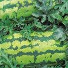 Georgia Rattlesnake Watermelon Seeds- 60
