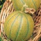 Ogen (Israeli) melon seeds- 60