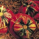 Turks Turban Pumpkin Seeds- 60