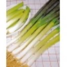 Green Bunching Onion Seeds- 200