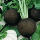 Black Spanish Round Radish Seeds- 300
