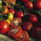 Sub Artic Plenty Tomato Seeds- 200