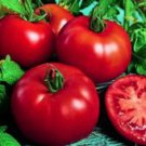 Siberian Tomato Seeds- 200