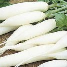 White Icicle Radish Seeds- 300