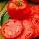 Homestead Tomato Seeds- 300