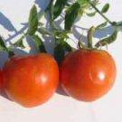 Floridade Tomato Seeds- 300