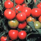 Early Cascade Tomato Seeds- 200