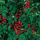 Cherry Sweetie Tomato Seeds- 200