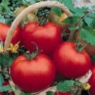 Cal Ace Tomato Seeds- 200