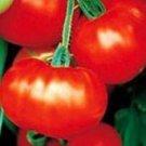Caribe Tomato Seeds - 200