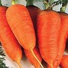 Scarlet Nantes Carrot Seeds- 400