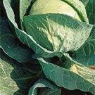 Copenhagen Market Cabbage- 400