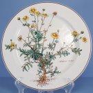 Villeroy & Boch Botanica Dinner Plate- Anthemis Tinctoria - 30% OFF