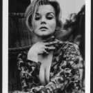 ACTRESS ANN MARGRET BUSTY BOSOMY DEEP CLEAVAGE  NEW REPRINT 5X7  AM-4