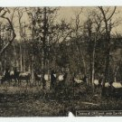 Elks at Elk Ranch Eureka Springs Arkansas Postcard