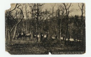 Elks at Elk Ranch Eureka Springs Arkansas Postcard
