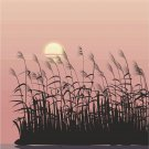 Lake Reeds Sunset Vector Art on Canvas
