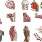 Anatomy Wall Decal Assortment Packs