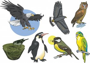 Birds Wall Decal Assortment Packs