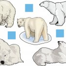 Polar Bear Realitistic Wall Decal Assortment Packs