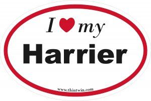 Harrier Oval Car Sticker