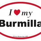 Burmilla Oval Car Sticker