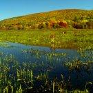 Basherkill Marsh