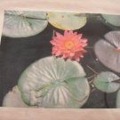 14-16, light pink, lilypad with pink flower