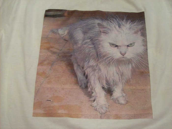 10-12, white, LOL cat - wet and grumpy
