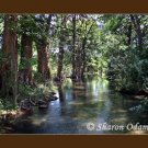 Frio River in Texas Fine Art Photography