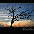 Texas Sunset with Old Tree Fine Art Scenic Photo
