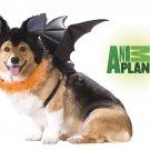 Dracula Vampire Dog Bat Costume Size:  Medium #20103