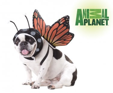 Fairy Butterfly Dog Costume Size: Medium #20101