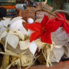 Christmas White Rustic Poinsettia in Burlap with Raffia Tie