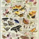 R. Lee - Butterfly Garden TIN SIGN