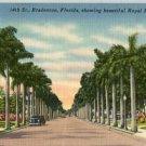 Linen Postcard. 14th St. Bradenton, Florida, showing beautiful Royal Palms