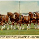 Chrome Double Fold-out Postcard. Budweiser - Anheuser-Busch - Clydesdales
