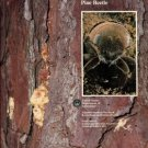 Thatcher, Robert C, et al, editors. The Southern Pine Beetle