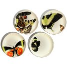 D.L. & Co. Butterfly Porcelain Plates (Set of 4)