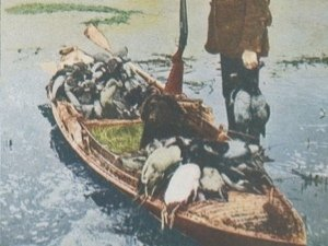 DUCK HUNTING STEREOVIEW CARD