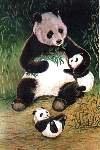 Panda Bear Large Flag
